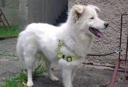 Městská policie hledá majitele psa