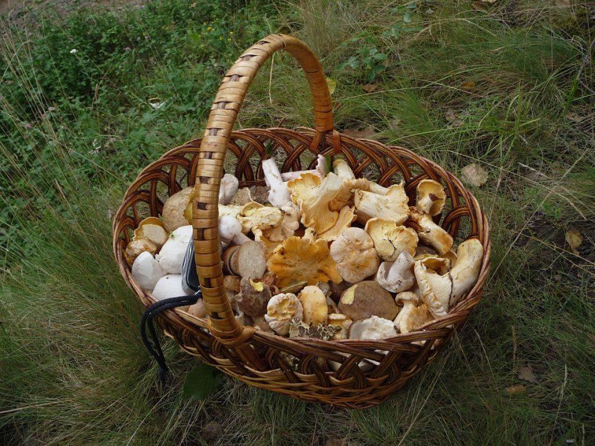 Rady houbařům